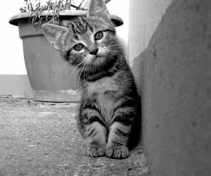 モノクロの猫ちゃん