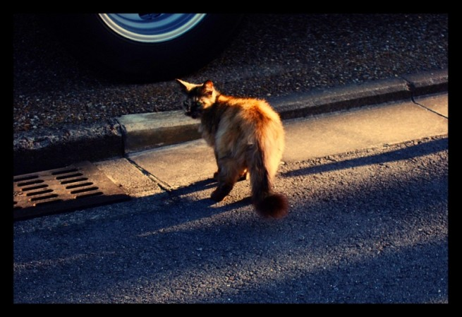 AfternoonKitten_by_xipx