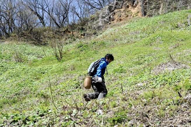 大自然の中、大地の恵みを求めて歩きます。