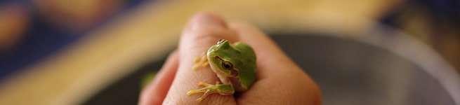 ある意味「井の中の蛙」