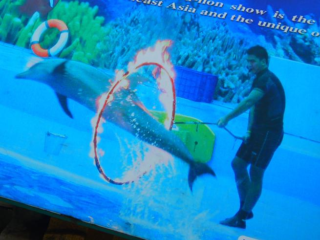 イルカの火の輪くぐりの看板