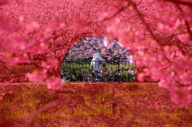 トンネル構図の例「桜の木と自転車」の解説