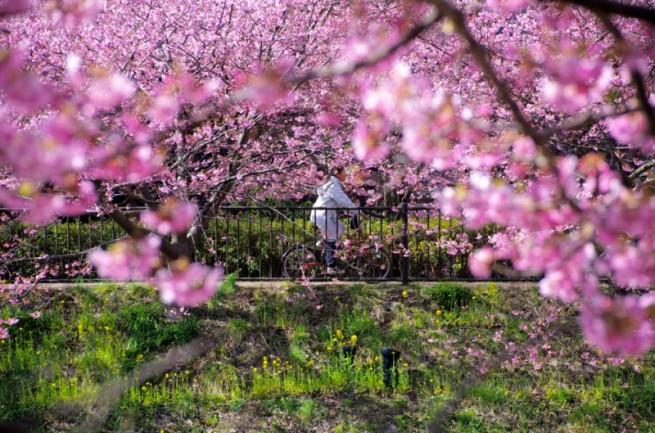 トンネル構図の例「桜の木と自転車」