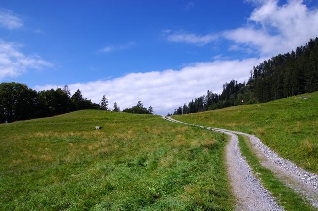 視線誘導構図の例「森の中の拓けた草原と小径」