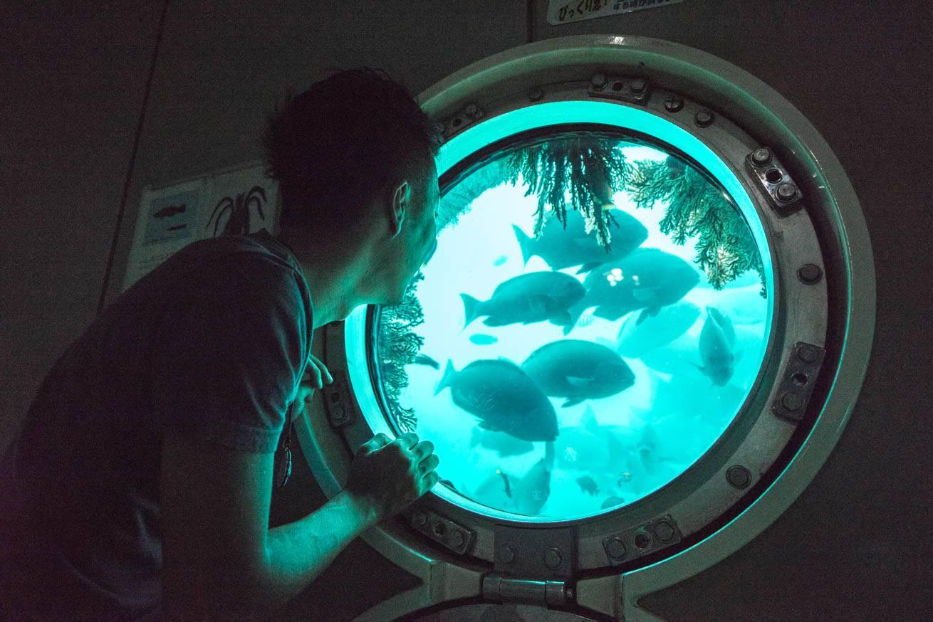 窓から海中の魚を覗いている株式会社LIGの社長・吉原ゴウの写真