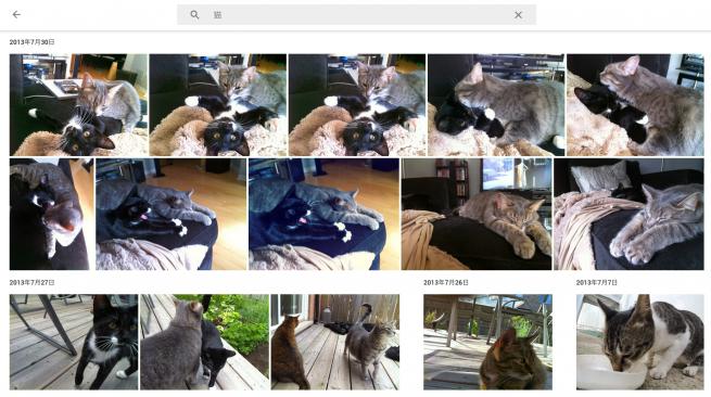 「猫」の検索結果