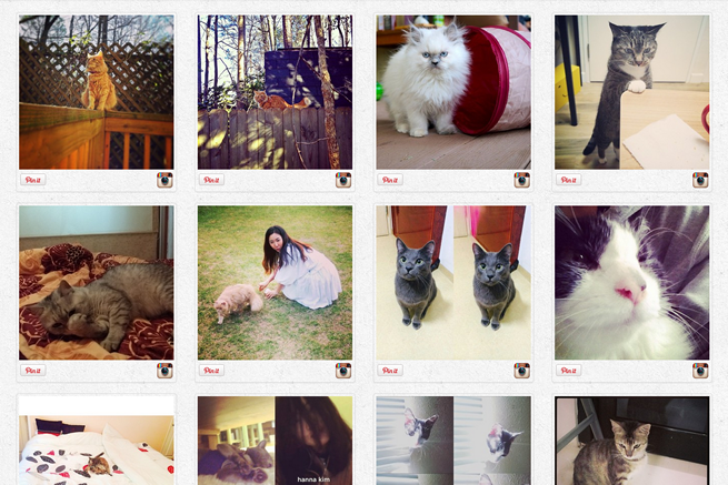 PinCat-Find-lovely-cat-and-Pin-It-onto-Pinterest