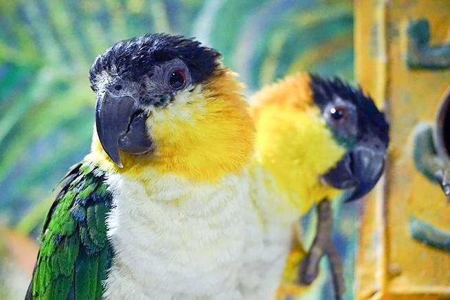 みどりの鳥