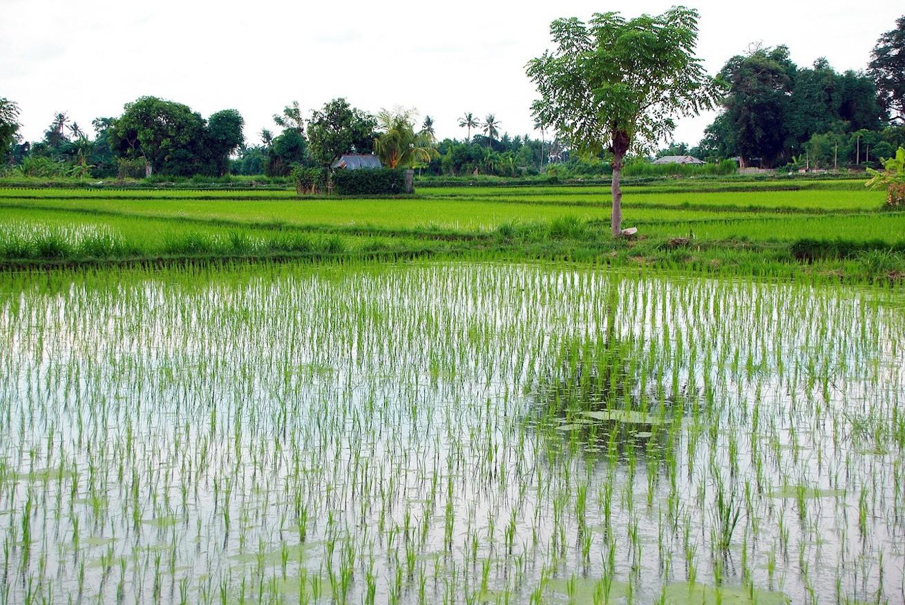 indonesia-1359491_1280