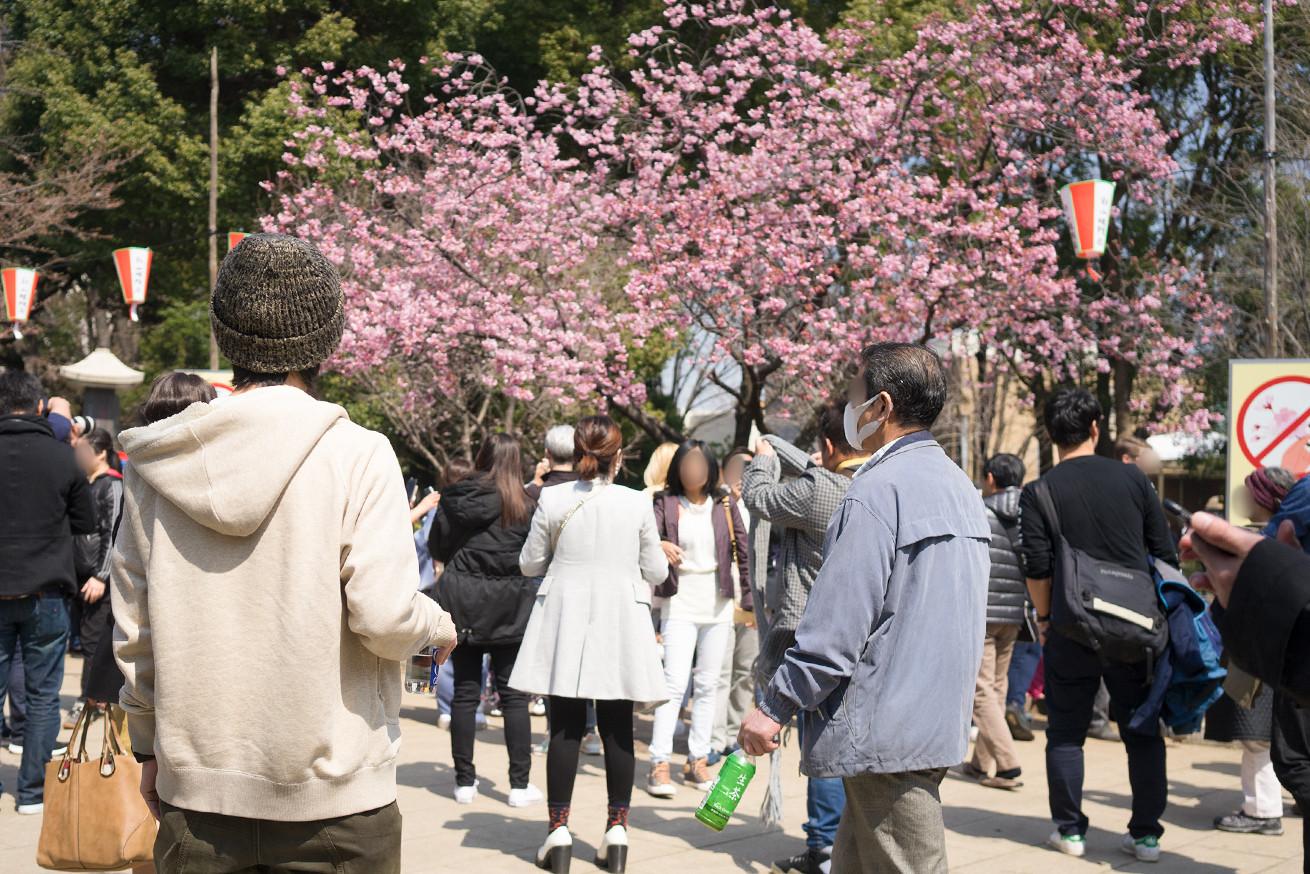 [桜か梅か考える侭田]