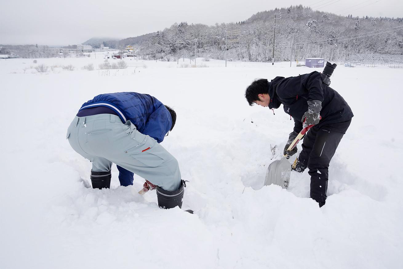 あゆさんとあらぴー雪を掘る