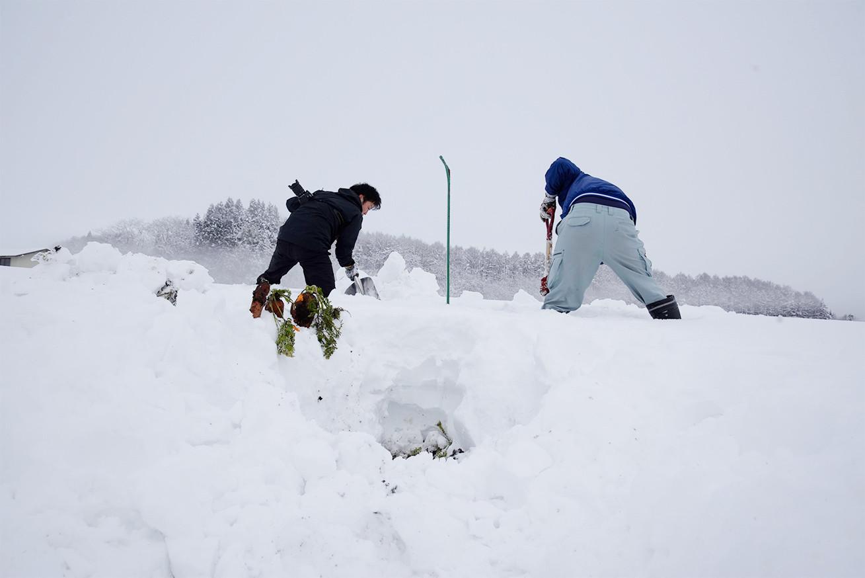 あゆさんとあらぴー雪を掘る5