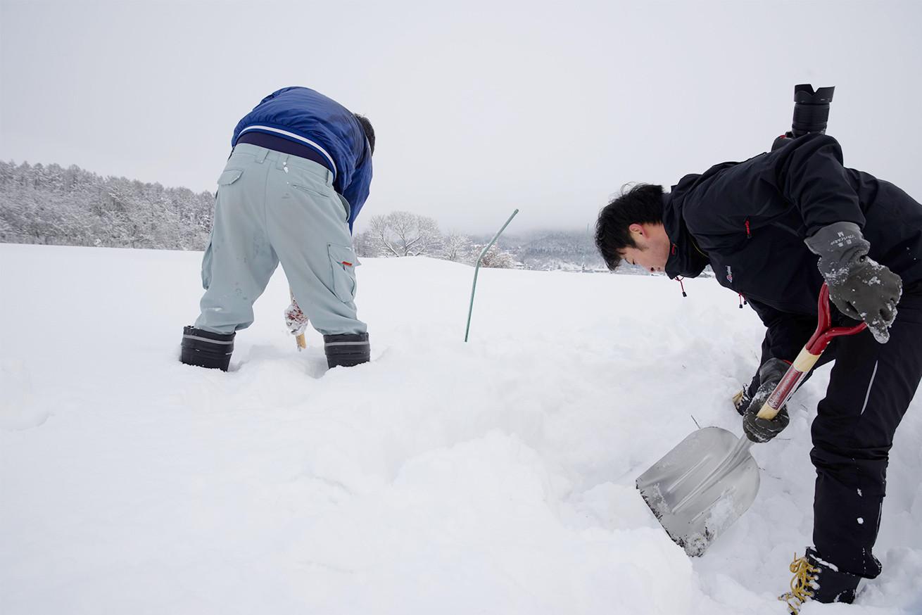 あゆさんとあらぴー雪を掘る2