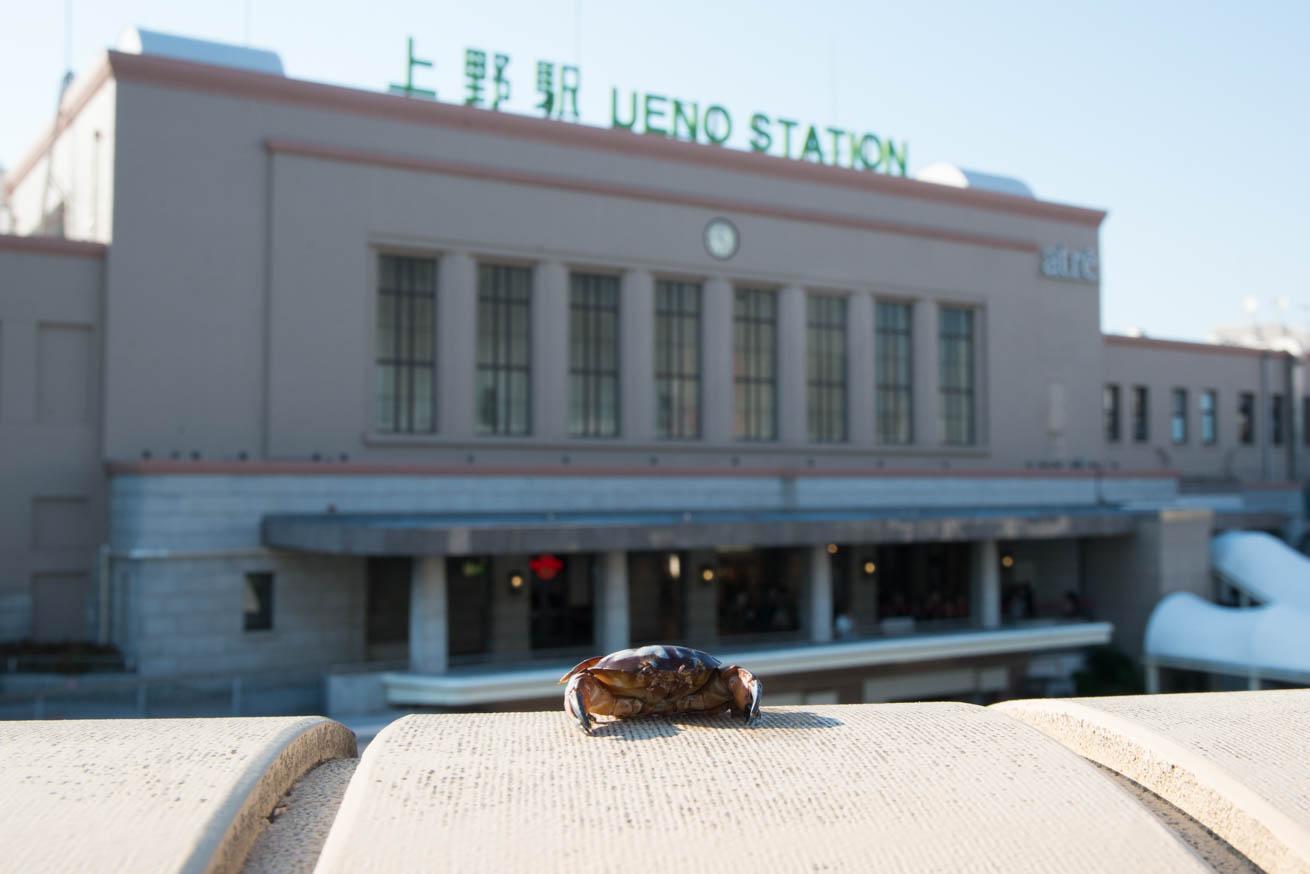 上野駅にいるマンジュウガニ