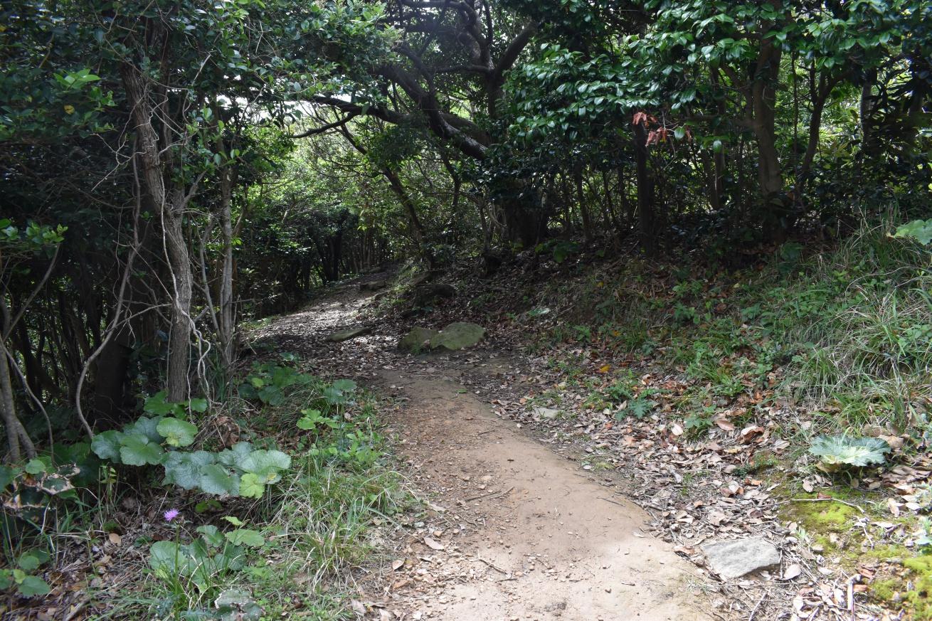壱岐の辰の島の丘を登っている写真