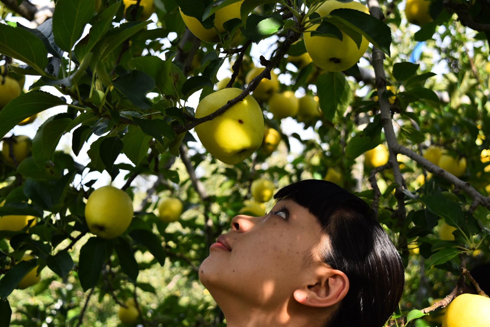 りんごを選定しているさきさん