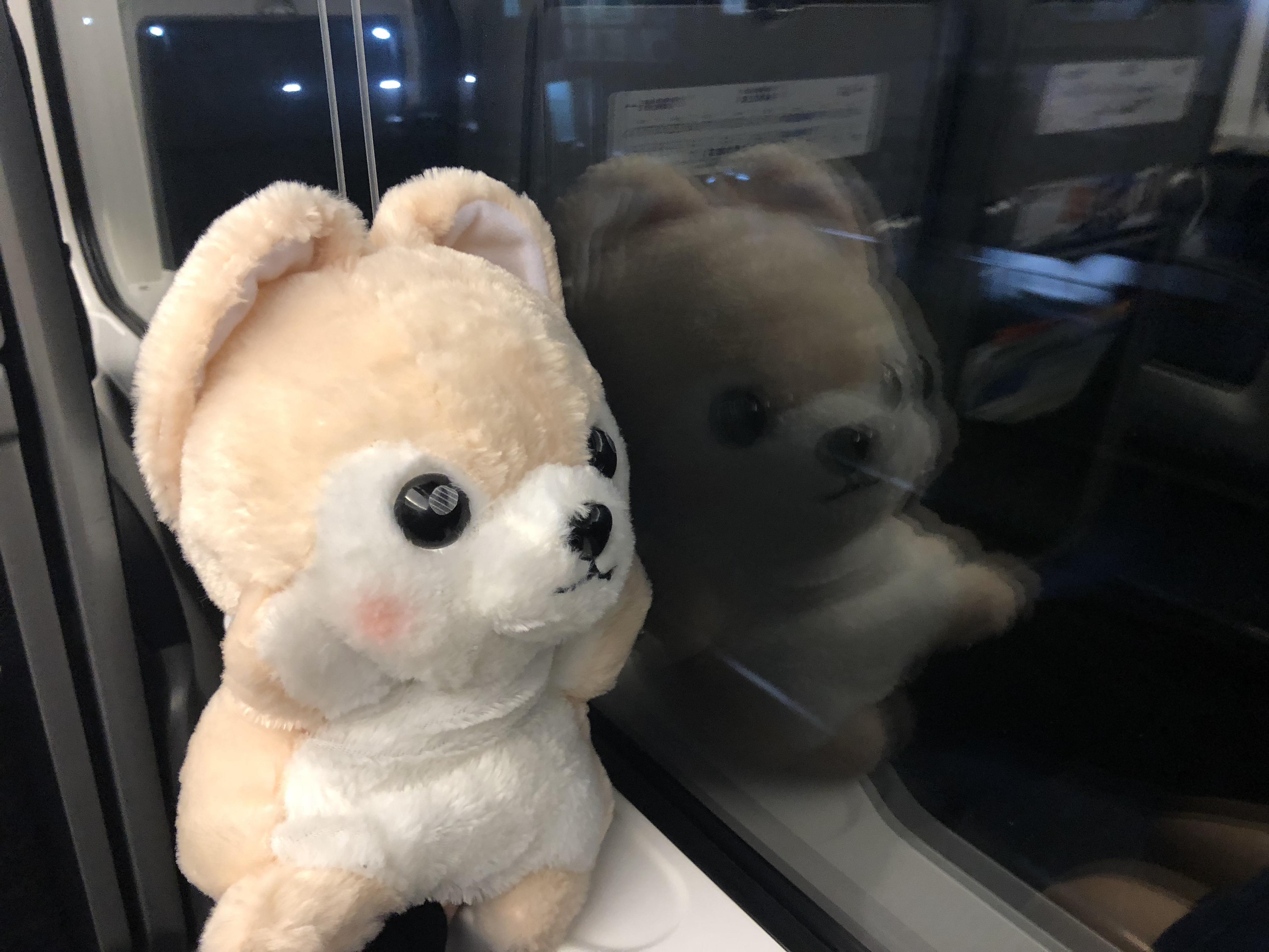 電車に乗っているゴウ子ちゃんの写真