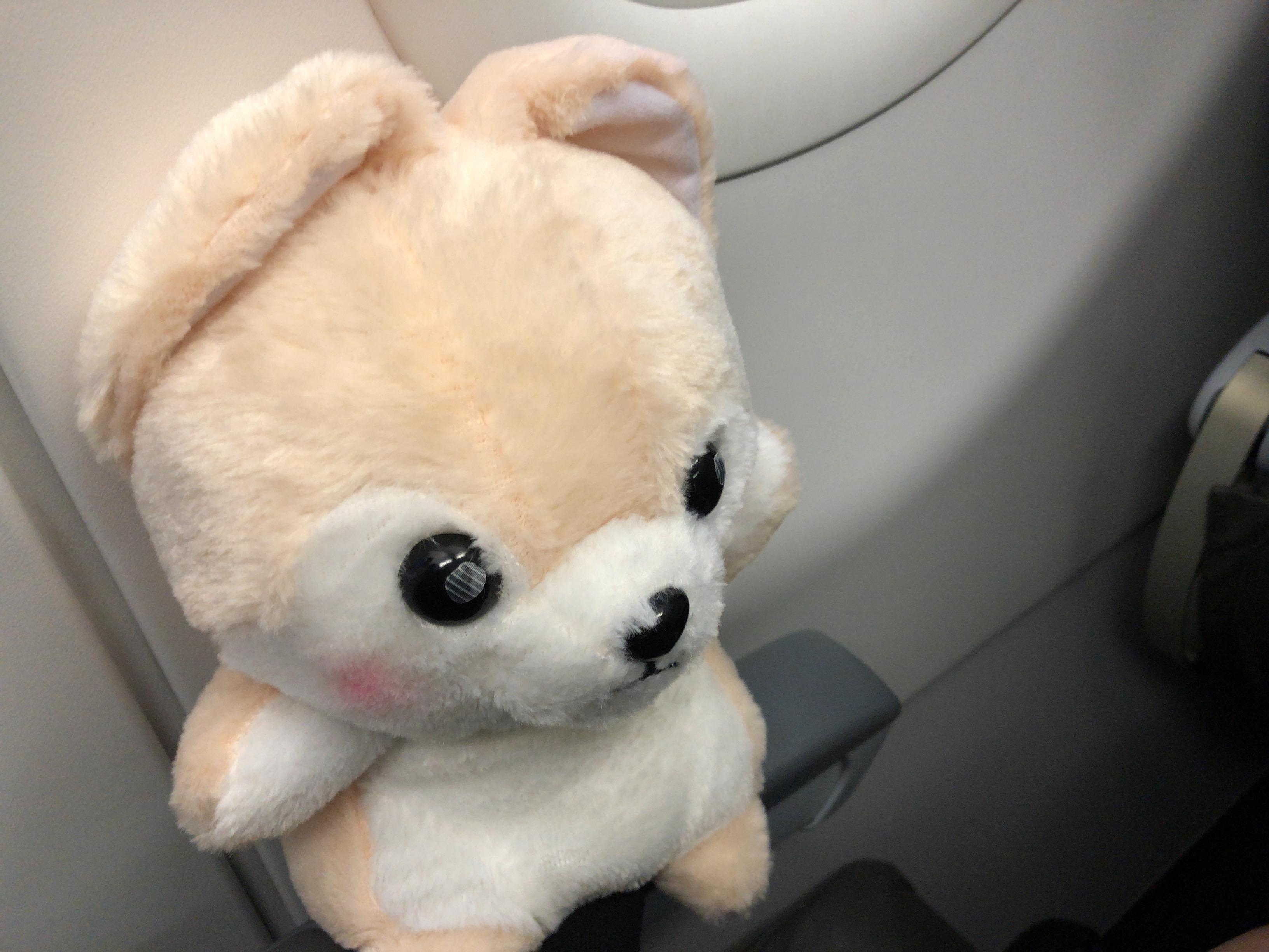 飛行機に無事乗れたゴウ子ちゃんの写真