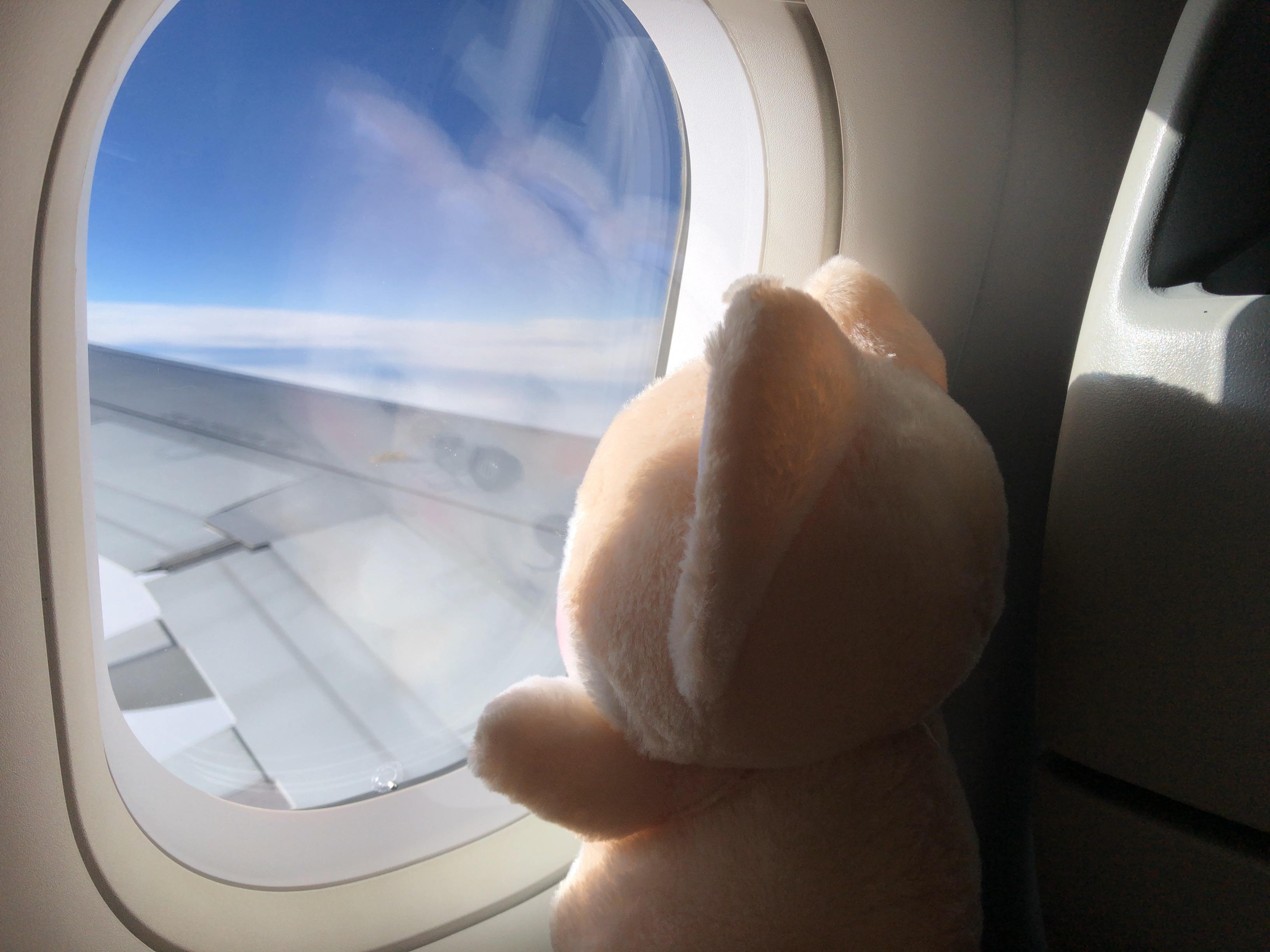 飛行機から外の景色を楽しむゴウ子ちゃんの写真