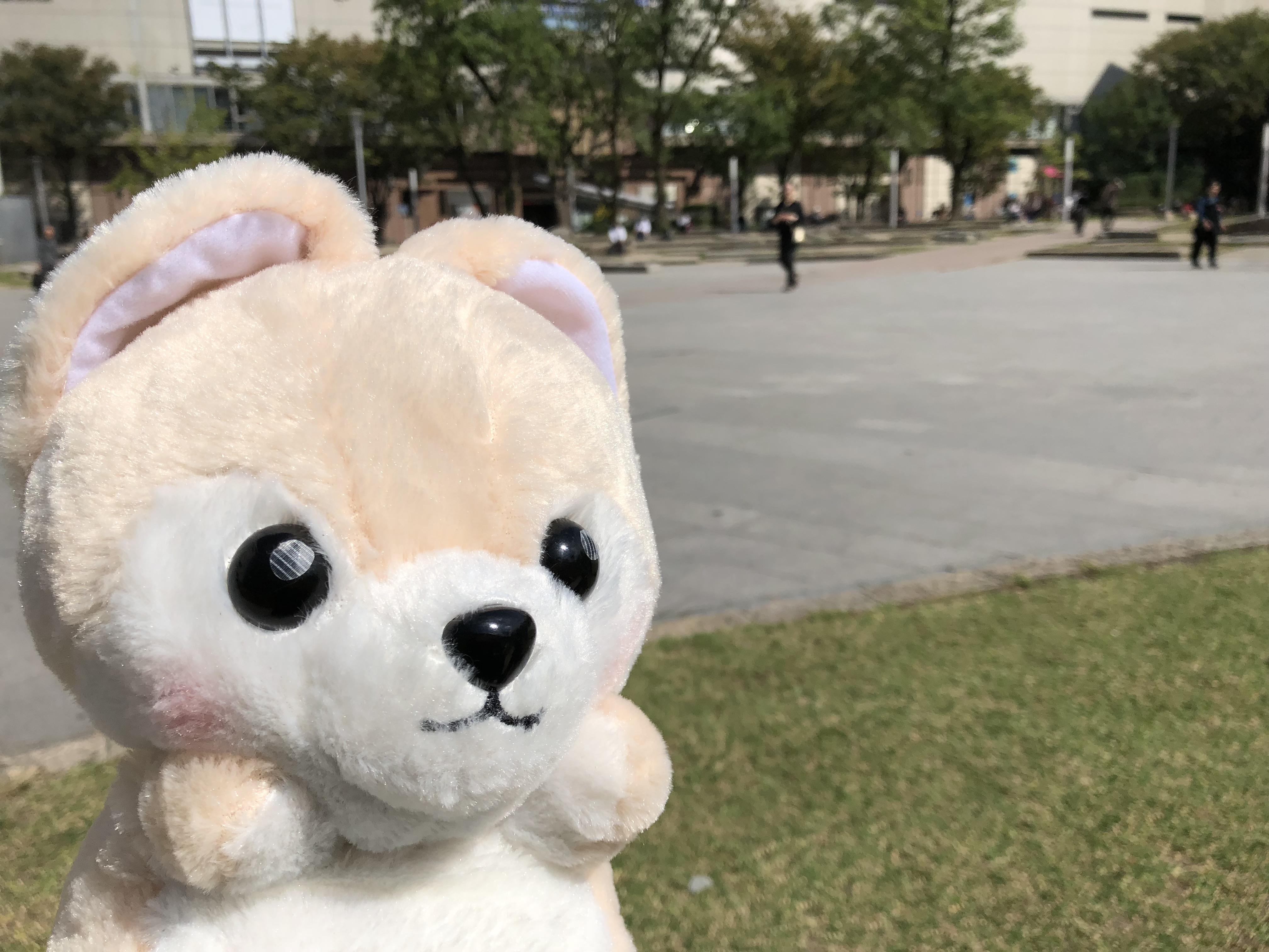 福岡県の天神・警固公園にやってきたゴウ子ちゃんの写真