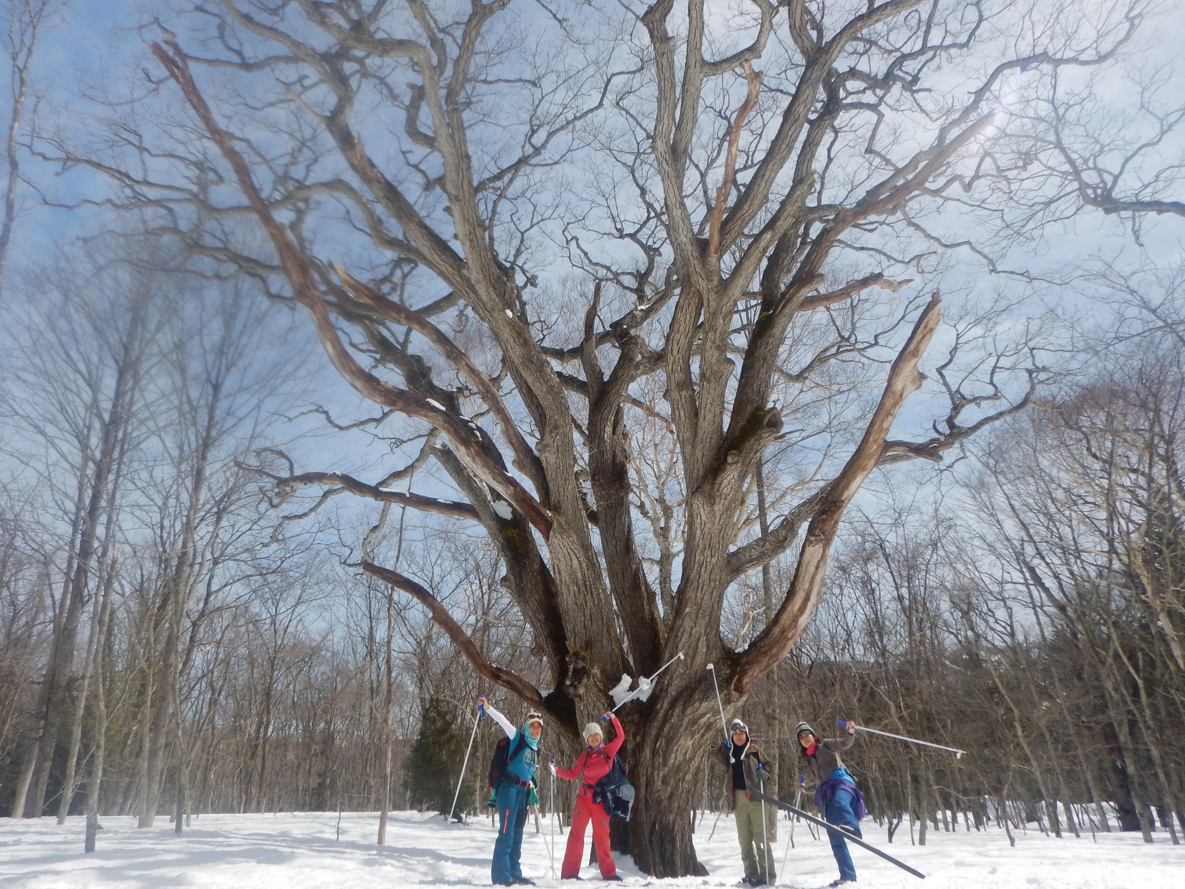 森の主「ミズナラ大王」とスノーアクティビティ客