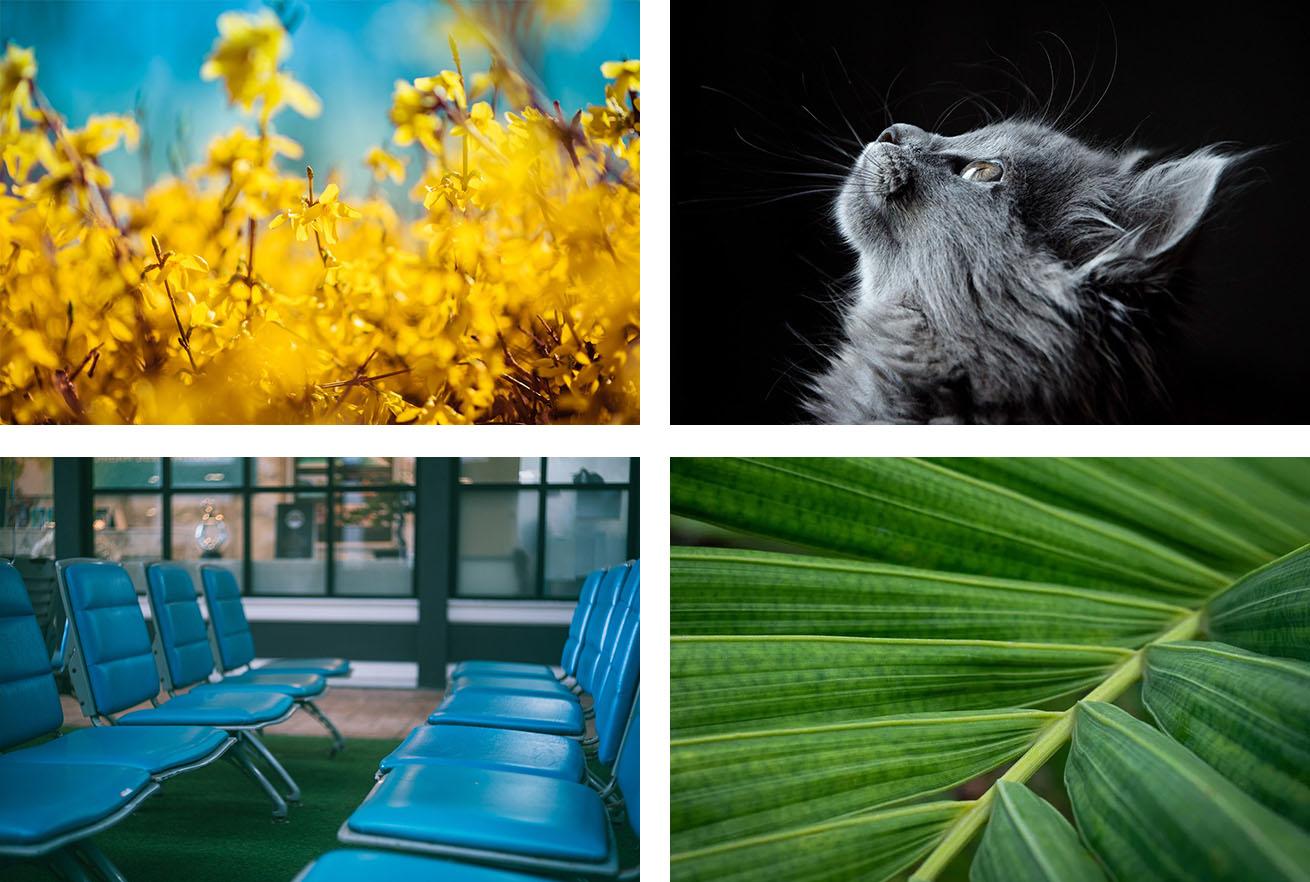 1.700万点以上の高品質なフリー画像素材 - Pixabayのサンプル画像