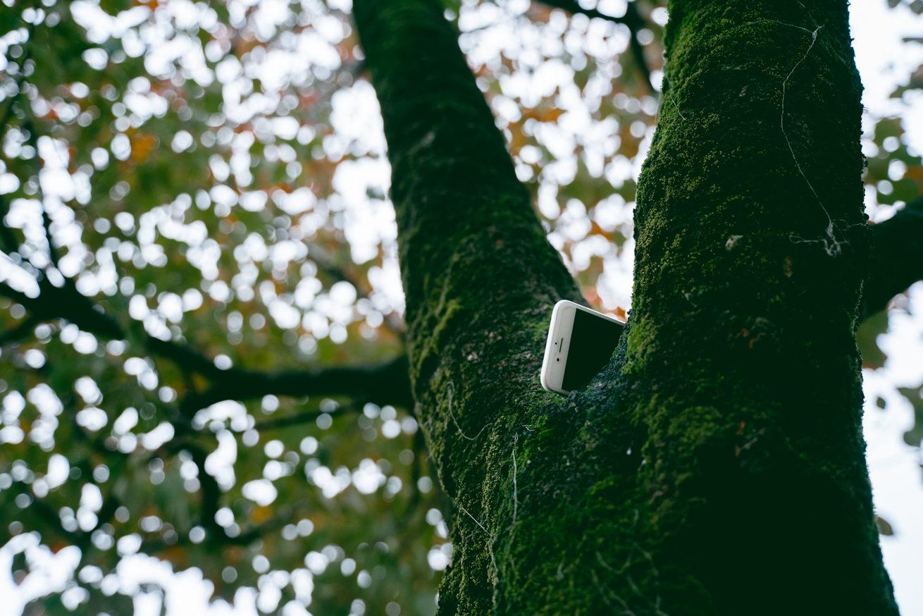 木の枝にスマホがかかっている