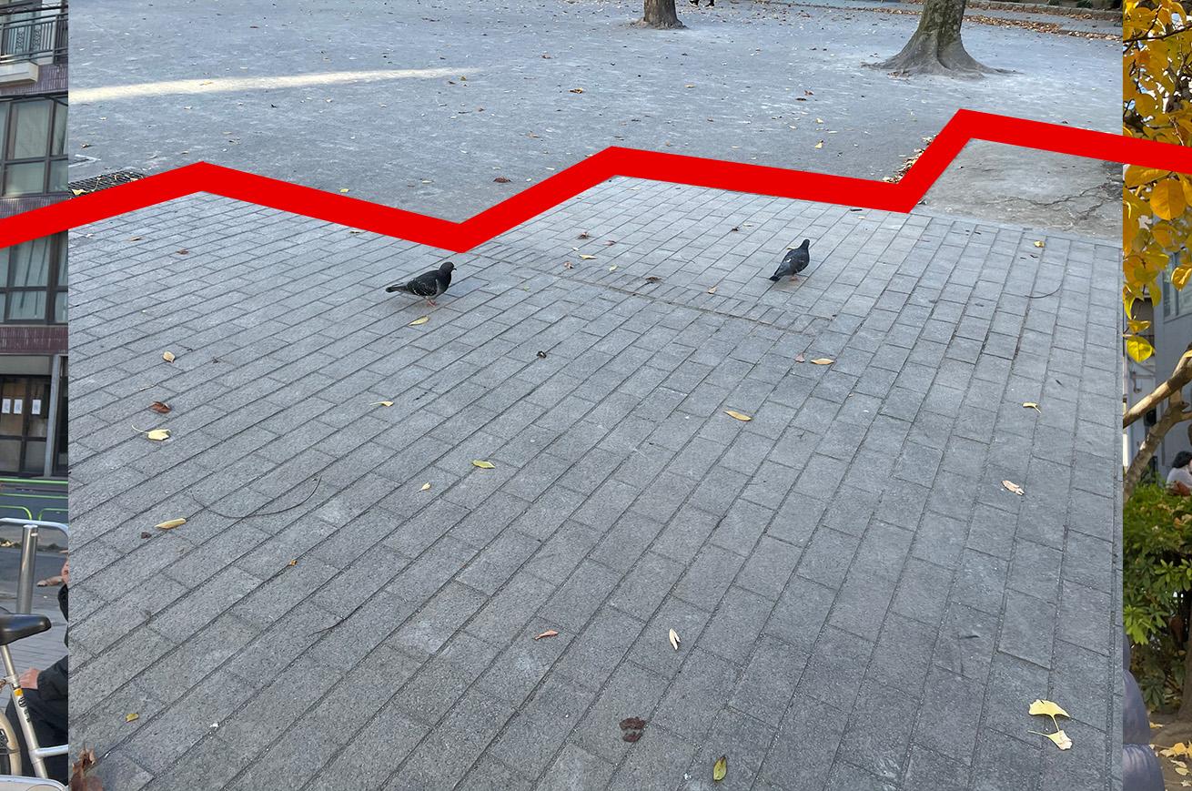 鳩(2羽)
