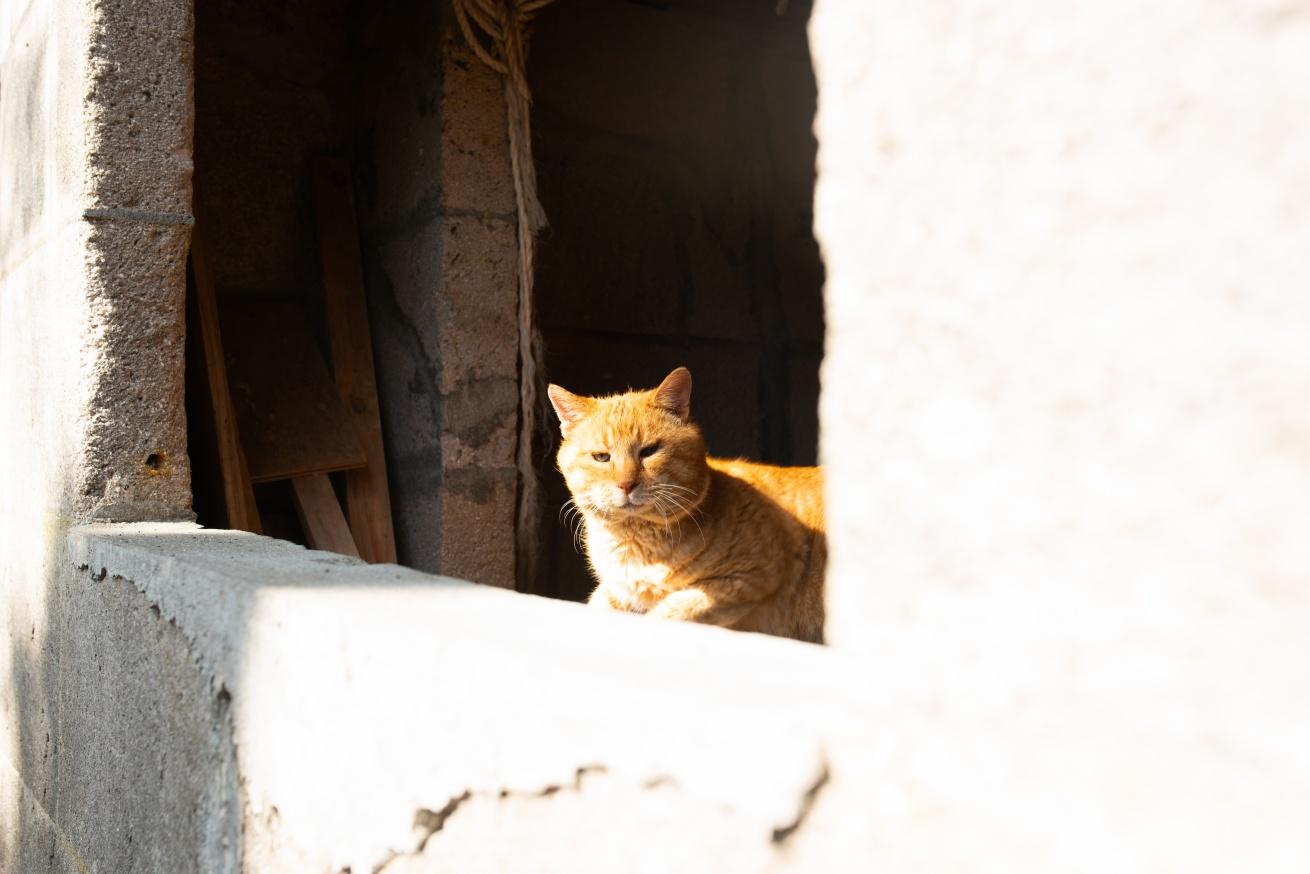 日向ぼっこの猫